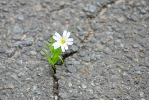GGSC Event: The Science of Resilience