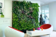 Why Your Office Needs More Nature