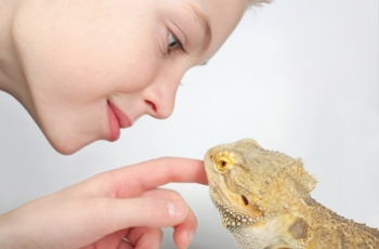 Just One Thing: Pet the Lizard