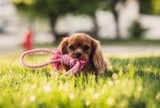 How Looking at Puppies Can Improve Your Marriage