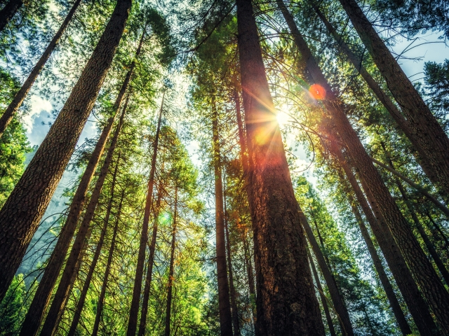 Why Trees Can Make You Happier Greater Good