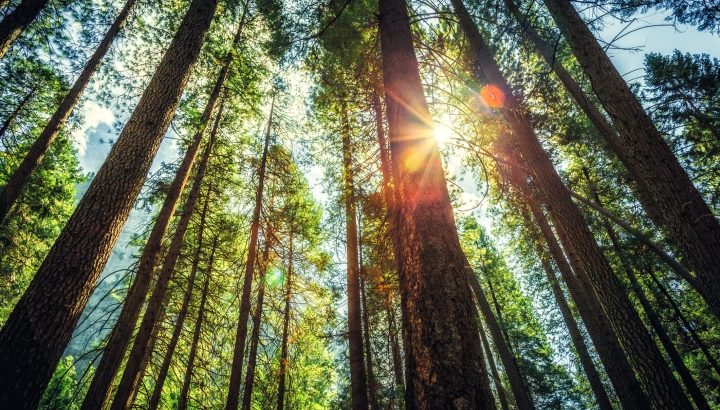 Why Trees Can Make You Happier