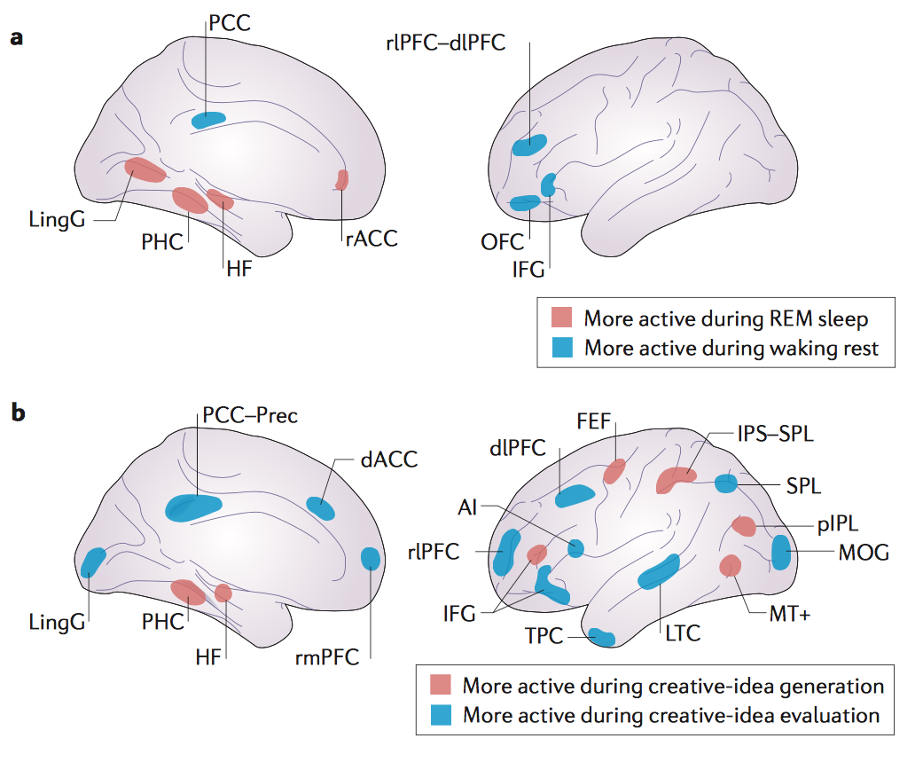 Brain activity during different types of consciousness