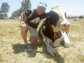 "Marc and Bessie, a rescued dairy cow at <a href=""http://farmsanctuary.org/farm/ca/"">Farm Sanctuary</a>."
