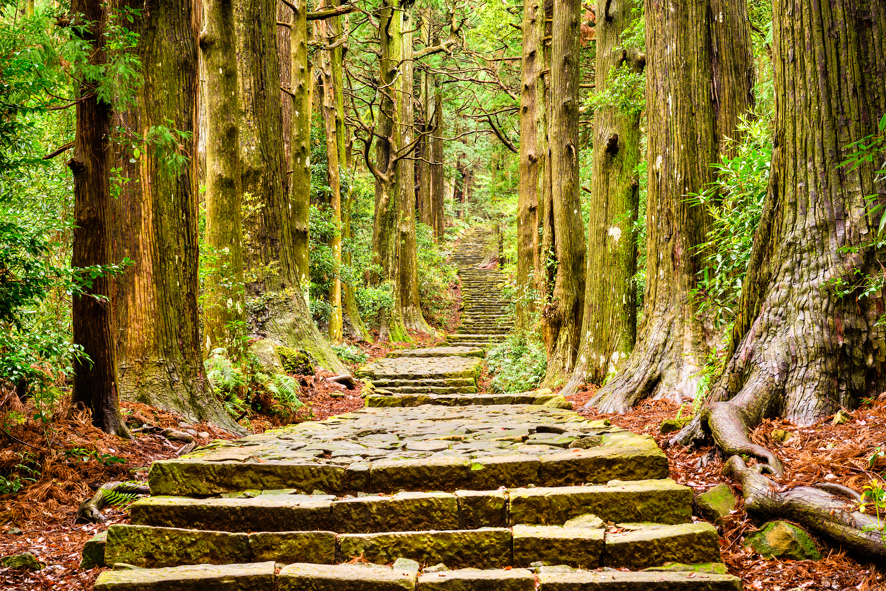 kumano kodo trail in japan