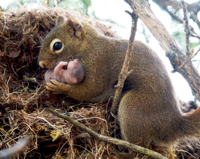the kindness of squirrels greater good